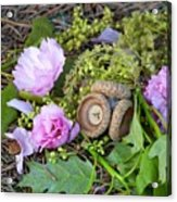 Blossoms And Acorn Acrylic Print