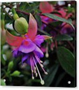 Blossoms And Blooms Acrylic Print