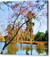 Blossoms And Spanish Moss Acrylic Print
