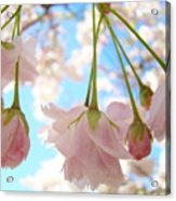 Blossoms Art Prints 52 Pink Tree Blossoms Nature Art Blue Sky Acrylic Print