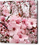 Blossoms Art Spring Pink Tree Blossom Floral Baslee Troutman Acrylic Print