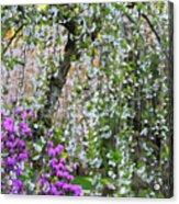 Blossoms Galore Acrylic Print