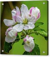 Blossoms In The Rain Acrylic Print