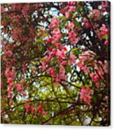 Blossoms In The Shanendoahs Acrylic Print
