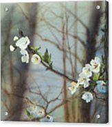 Blossoms In The Wild Acrylic Print