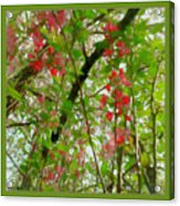 Blossoms Of Spring Time Acrylic Print