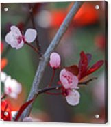 Blossoms Petite Acrylic Print