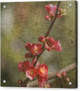 Blossoms Acrylic Print