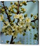 Blossomtime Acrylic Print