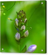 Blossom Dream Acrylic Print