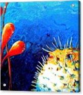 Blow Fish Acrylic Print