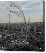 Blow With The Wind Acrylic Print