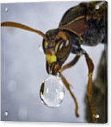 Blowing Bubbles Acrylic Print