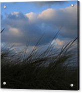 Blowing In The Wind Acrylic Print
