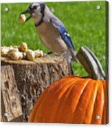 Blu Goes Nuts Acrylic Print