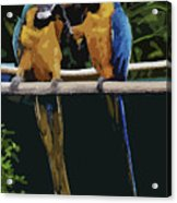 Blue And Gold Macaw 1 Acrylic Print