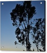 Blue And Gold Sunset Tree Silhouette I Acrylic Print