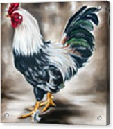 Blue And Green Rooster Acrylic Print