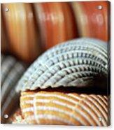 Blue And Orange Seashells Acrylic Print
