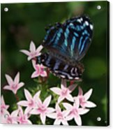 Blue And Pink Make Lilac Acrylic Print