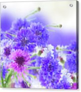 Blue And Violet Cornflowers Acrylic Print