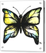 Blue And Yellow Watercolor Butterfly Acrylic Print