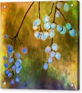 Blue Autumn Berries Acrylic Print by Judi Bagwell