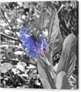 Blue Bell Flower Acrylic Print