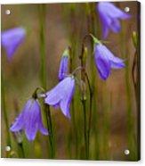 Blue Bells Wyoming Acrylic Print