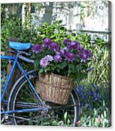 Blue Bike Acrylic Print by Cheri Randolph