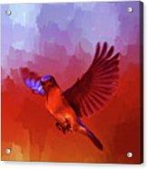 Blue Bird 01  Acrylic Print