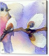 Blue Bird And Pussywillow Acrylic Print