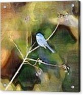 Blue Bird Acrylic Print