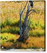 Blue Bird Not Quite Stumped Acrylic Print