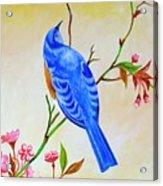 Blue Bird On Cherry Blossom  Acrylic Print