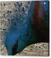 Blue Bird Portrait Acrylic Print