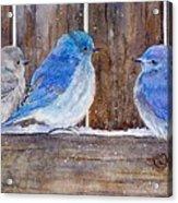 Blue Birds Fly Acrylic Print