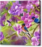 Blue Birds With Azalea Acrylic Print