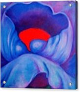 Blue Bloom Acrylic Print
