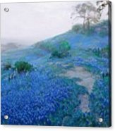 Blue Bonnet Field Early Morning Acrylic Print