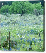 Blue Bonnets,poppies And Willow Tree 2 Acrylic Print