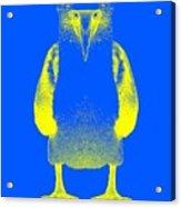 Blue Booby Acrylic Print
