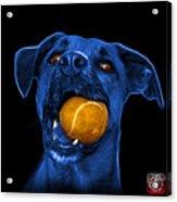 Blue Boxer Mix Dog Art - 8173 - Bb Acrylic Print