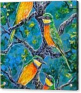 Blue Breasted Bee Eater Acrylic Print