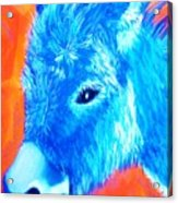 Blue Burrito Acrylic Print