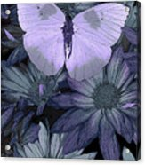 Blue Butterfly Acrylic Print by JQ Licensing