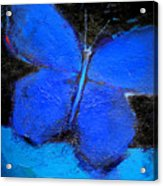 Blue Butterfly Acrylic Print