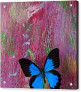 Blue Butterfly On Colorful Wooden Wall Acrylic Print