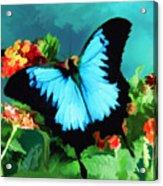 Blue Butterfly On Lantana Plant Oil Painting Acrylic Print