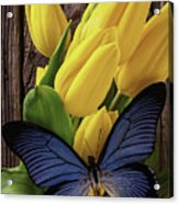 Blue Butterfly On Yellow Tulips Acrylic Print